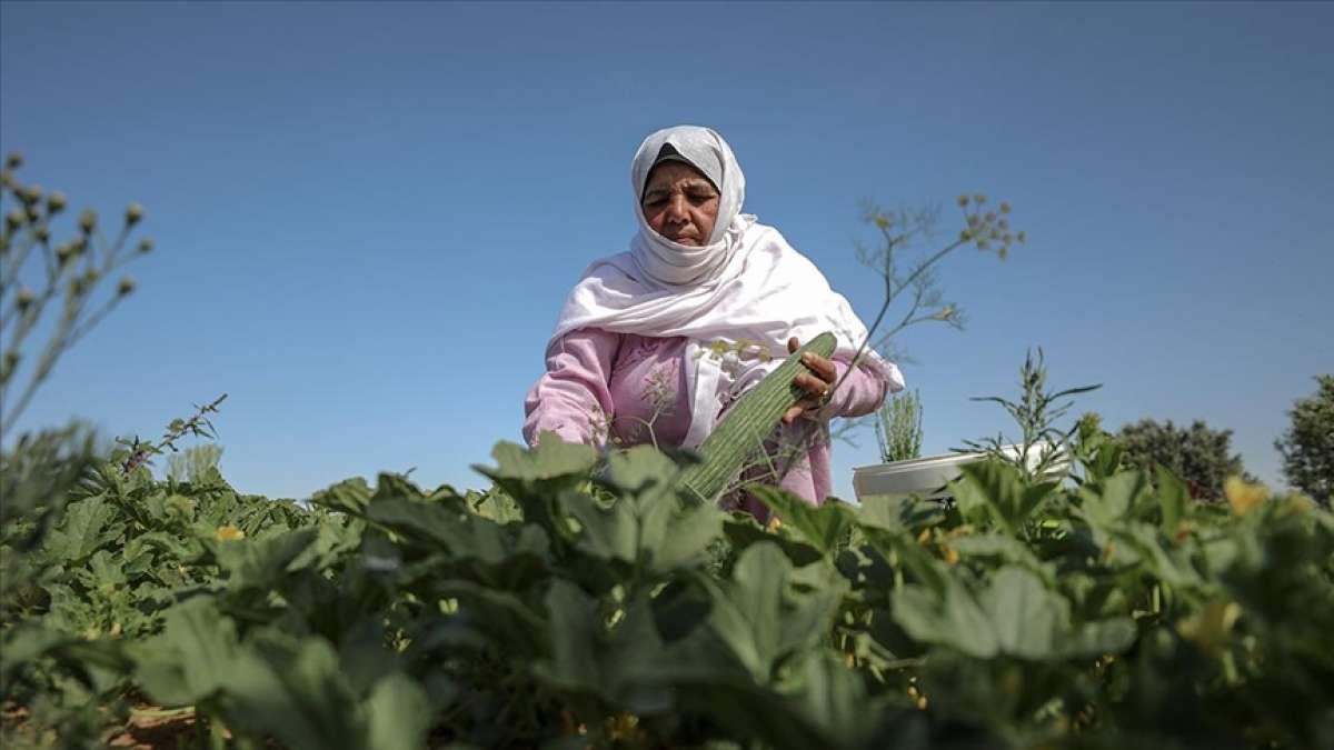 Filistinli kadınlar, topraklarını İsrail'e bırakmamak için ön saflarda mücadele ediyor
