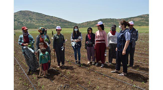 Gaziantep'e tarlada çalışan kadınlara