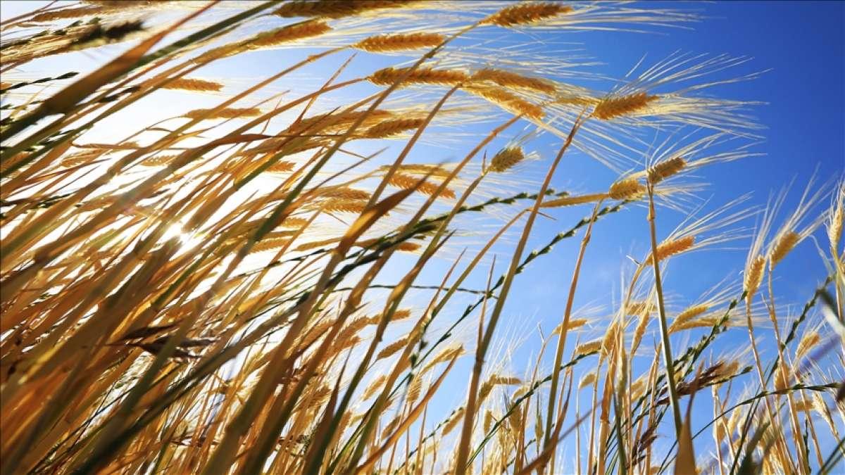 Kovid-19 sürecinde uygulanan 106 tedbirle tarım ve gıdada çarklar döndü