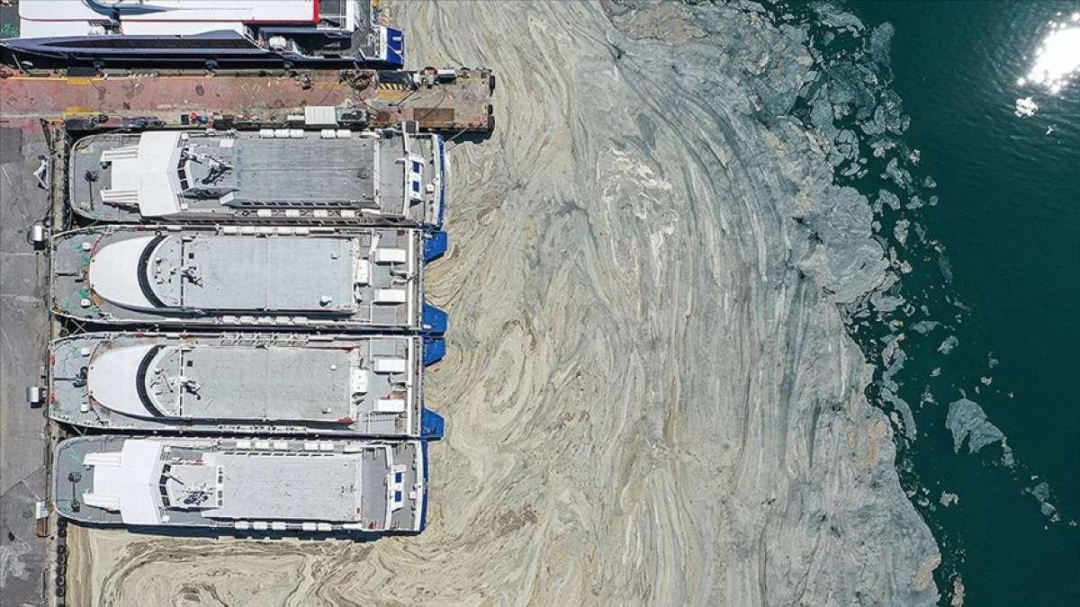 Marmara Denizi'ndeki müsilaj sorunu için laboratuvarda 'reaktif oksijen' çalışması de