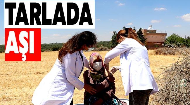 Tarlada aşı